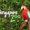 Singapore Zoo + Tram Ride (ผู้ใหญ่)