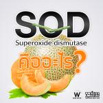 SOD คืออะไร?
