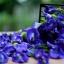 หัวน้ำหอม กลิ่นดอกอัญชัน : 002402 thumbnail 1