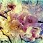 หัวน้ำหอมกลิ่น beauty blossom -PC0049 450 ml. thumbnail 1