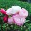 หัวน้ำหอม oriental rose : 002368 thumbnail 1