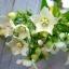 หัวน้ำหอมดอกชมนาถ+น้ำผึ้ง ChomardHoney thumbnail 1