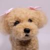 ตุ๊กตาสุนัขใยขนแกะ พันธุ์พุดเดิ้ลทอย (Toy Poodle) Size L