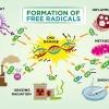 อนุมูลอิสระ สาเหตุของโรค และสารต้านอนุมูลอิสระในอาหารจากส่วนต่างๆของถั่วดาวอินคา