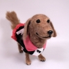ตุ๊กตาสุนัขใยขนแกะ พันธุ์ดัชชุน (DACHSHUND) Size L