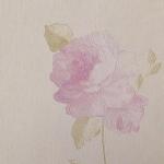 วอลเปเปอร์ติดผนังลายดอกไม้สีชมพู